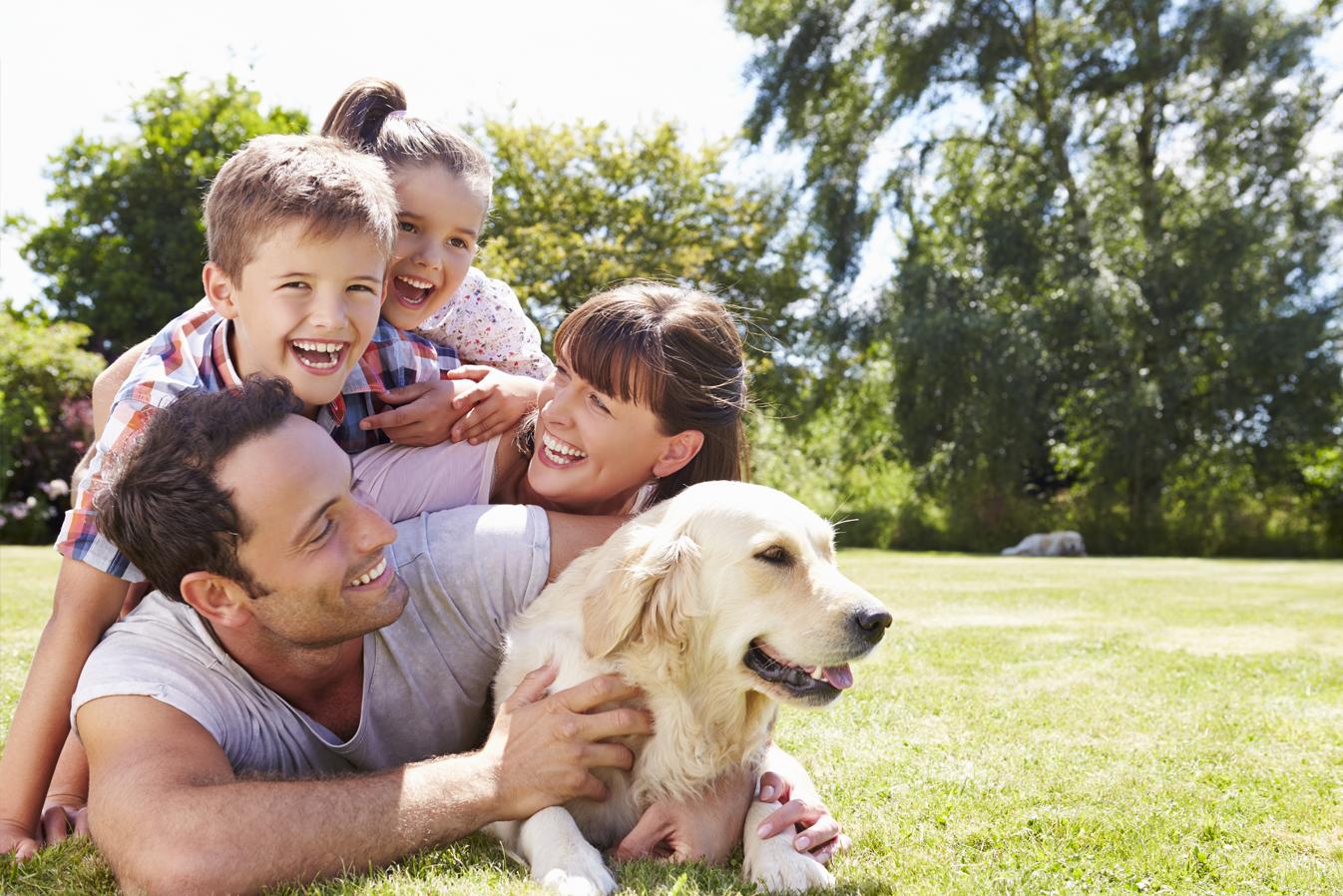 4 dicas para fazer seu pet ficar mais tranquilo