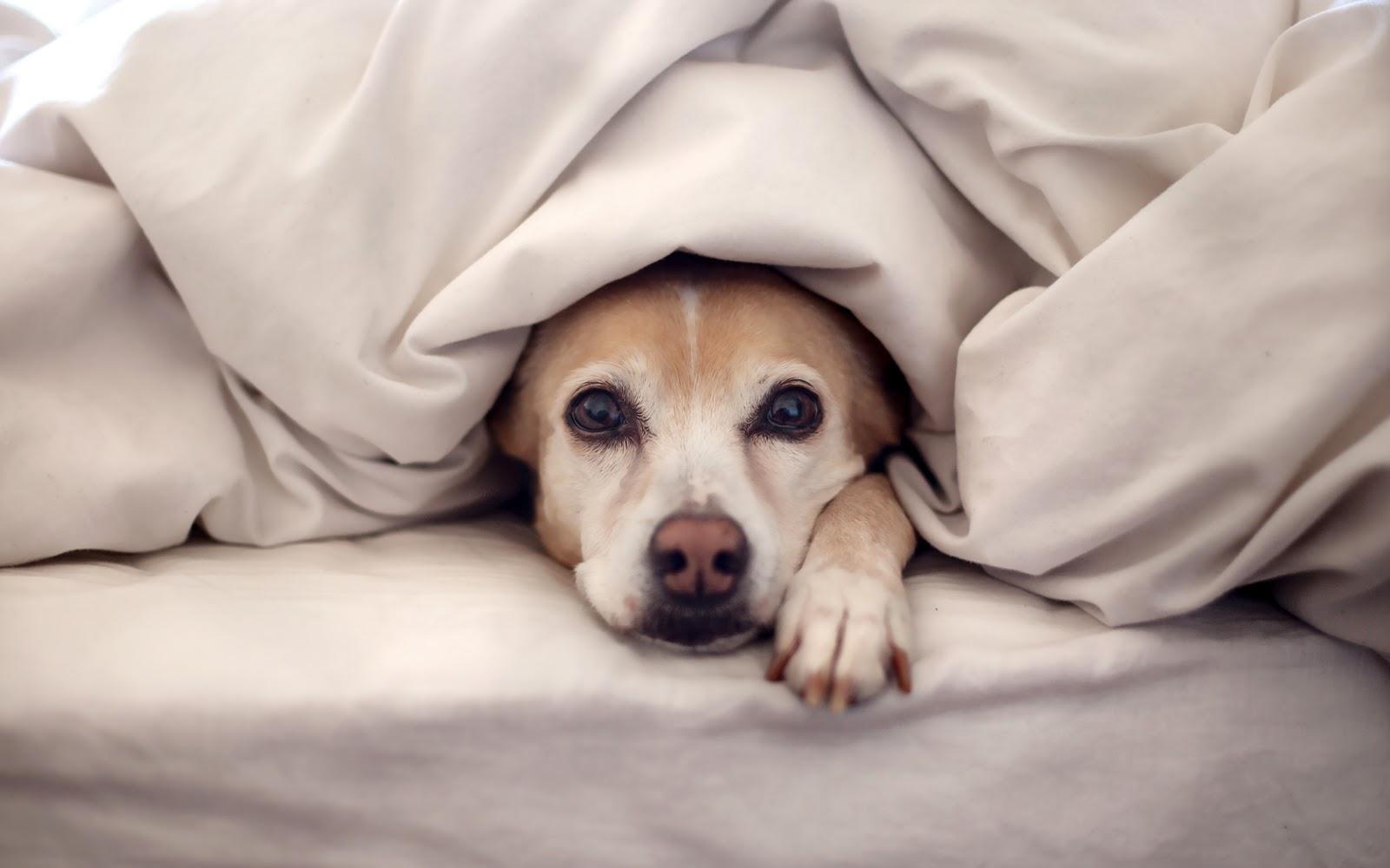 Cuidados essenciais para ter com os pets durante o inverno