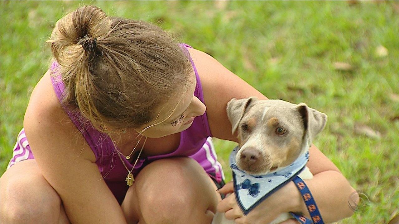 Acidentes com animais de estimação: saiba como evitar
